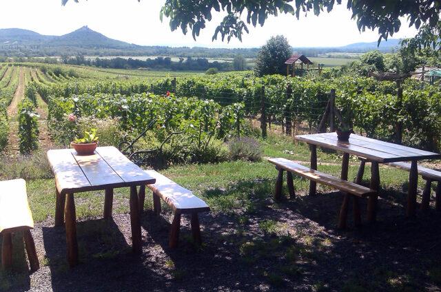 Vinice a sady, Balaton, Maďarsko