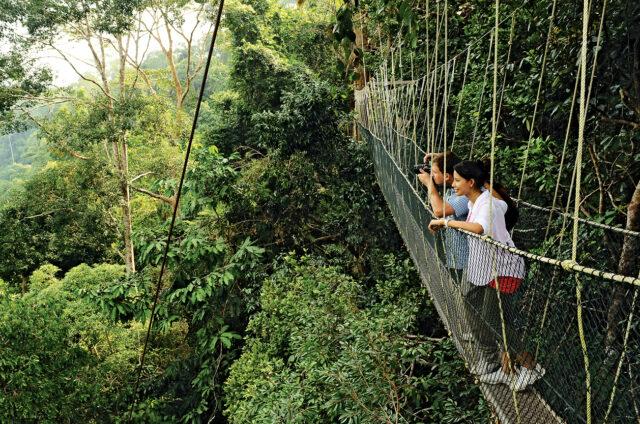 """""""Chodníky"""" vN.P. Taman Negara, Malajsie"""