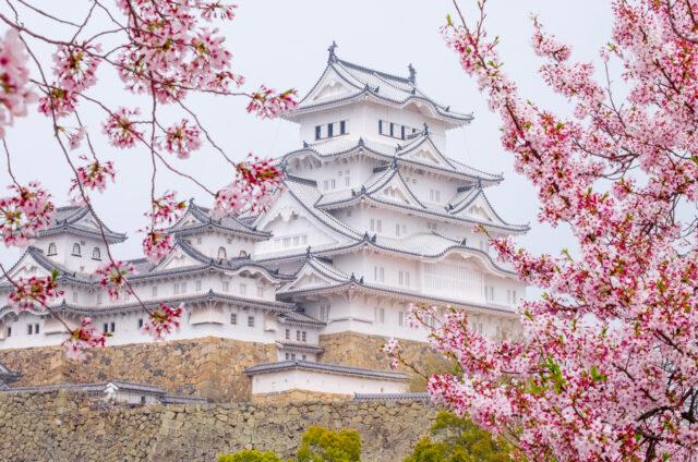 Hanami v Himedži, Japonsko