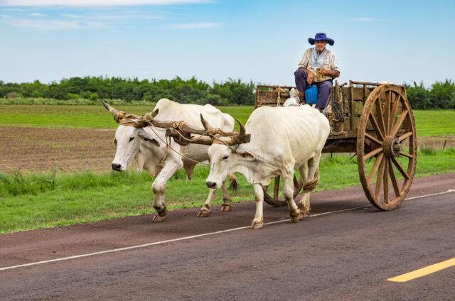 Místní Paraguayec, Paraguay