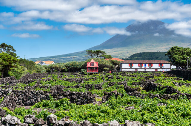 Nejvyšší hora a vinice v popředí, Pico, Azory