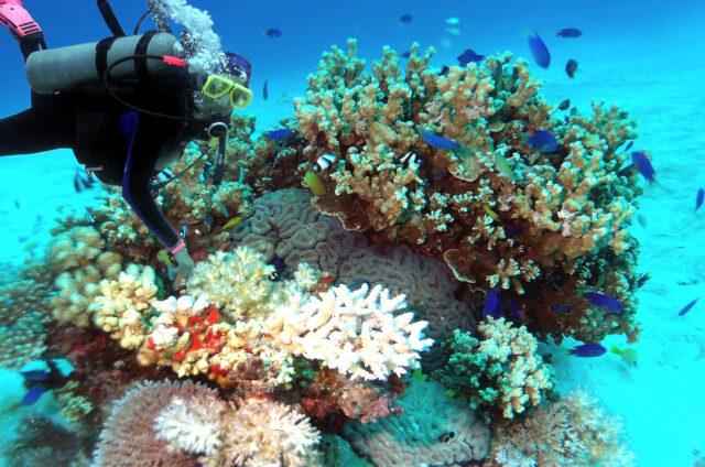 Potápění za korály, Marshallovy ostrovy
