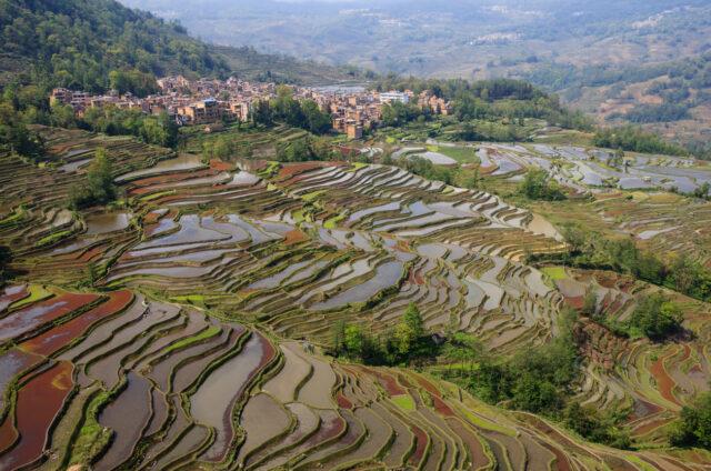 Rýžová pole u Jün nanu, Vietnam