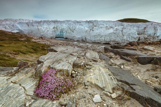 Russelovův ledovec, Grónsko
