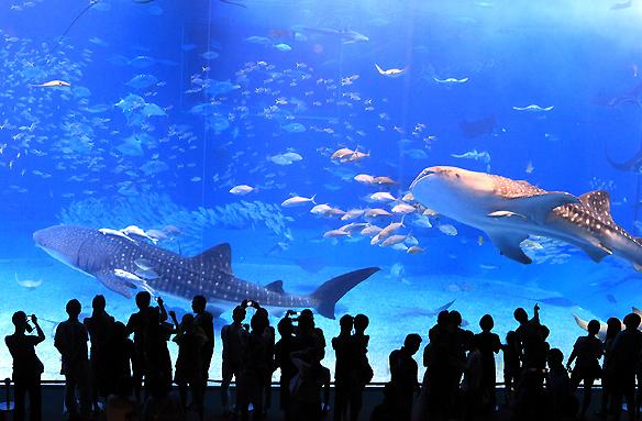 Mořské akvárium, Okinawa, Japonsko