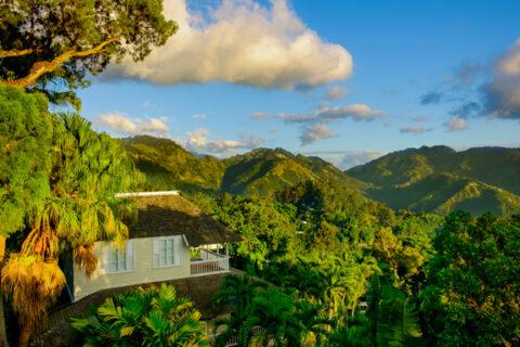 The Blue Mountains, Jamajka