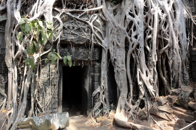 Chrám Ta Phrom v džungli, Kambodža