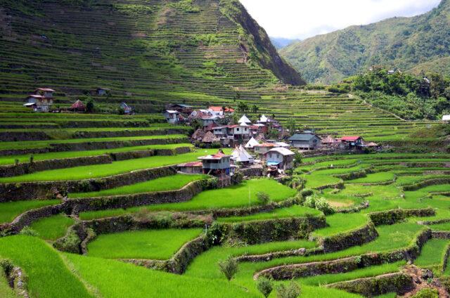 Rýžové terasy u Batadu, Luzon, Filipíny
