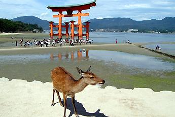 Plovoucí torii u ostrova Mijadžima, Japonsko