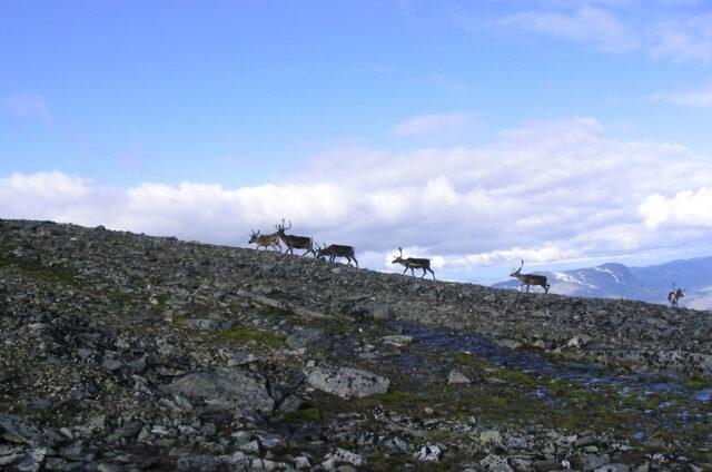 N.P. Jotunheimen, Norsko