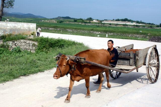 Původní zemědělství, KLDR