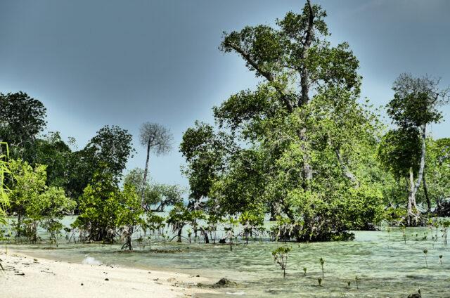 Pláže a vegetace Andaman, Indie