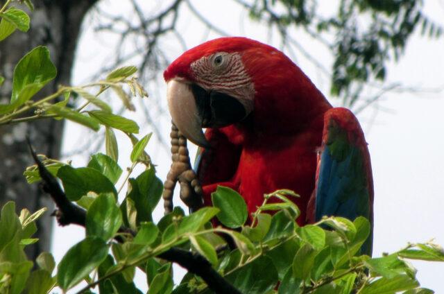 Pralesní džungle, Amazonie, Surinam