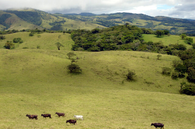Rezervace Monteverde, Kostarika