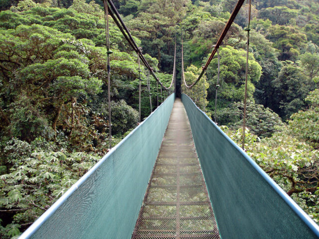 V rezervaci Monteverde, Kostarika