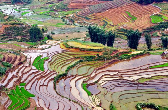 Rýžové terasy Sa-Pa, Vietnam