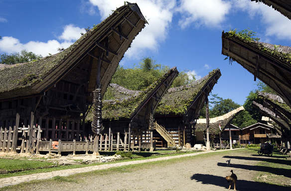 Tradiční domy Tong-konany, Sulawesi