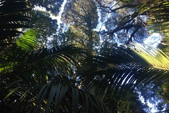 Původní prales, Nový Zéland