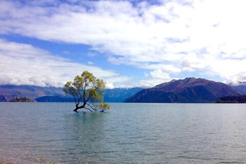 Ikonický strom na jezeřě Eanaka, Nový Zéland